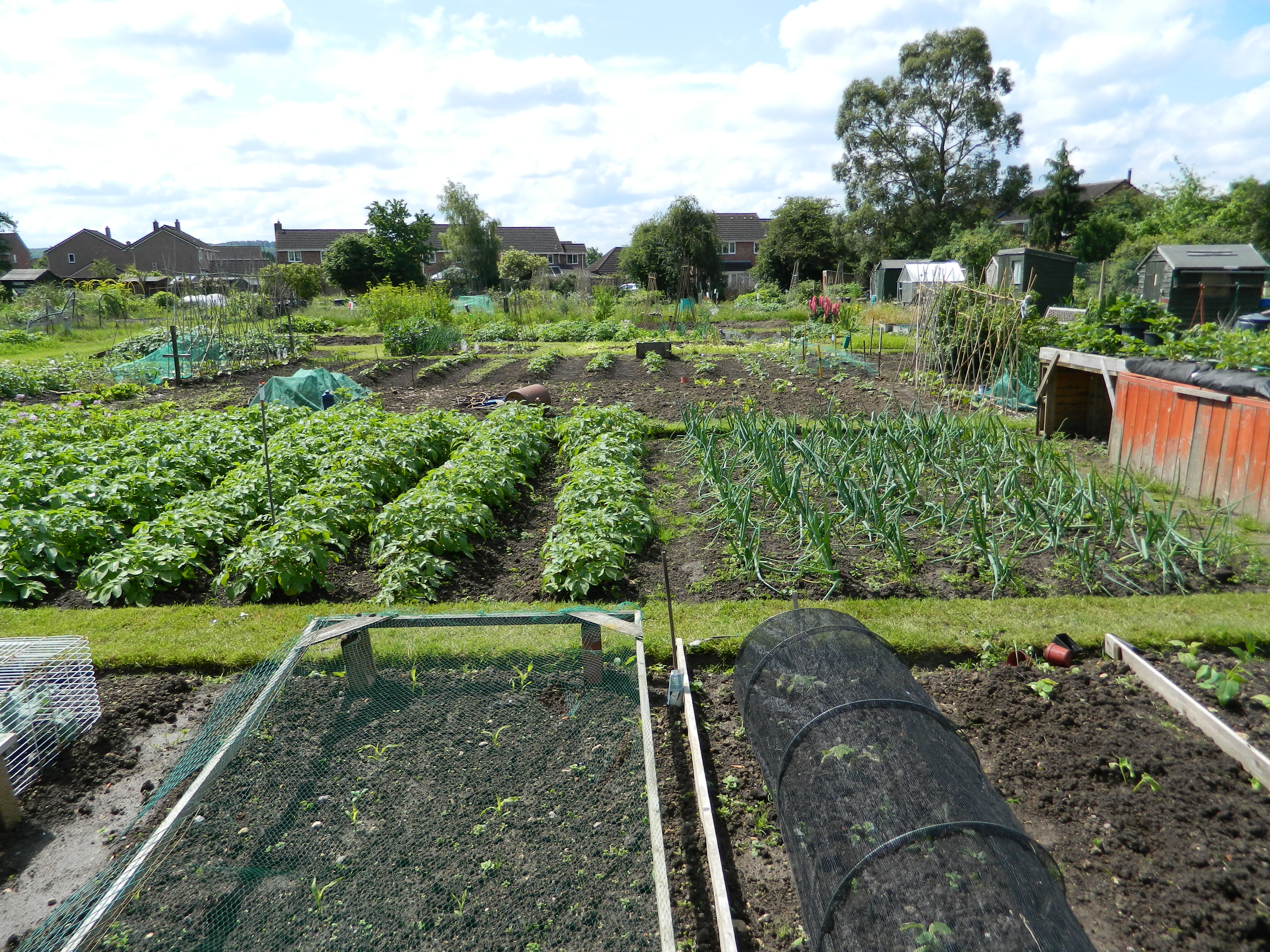 Allotments, Chippenham
