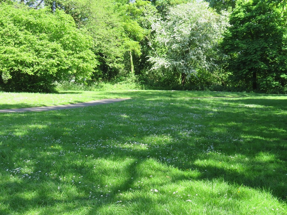 Monkton Park Chippenham. Green grass with daisy's different toned green trees with a pathway infront.