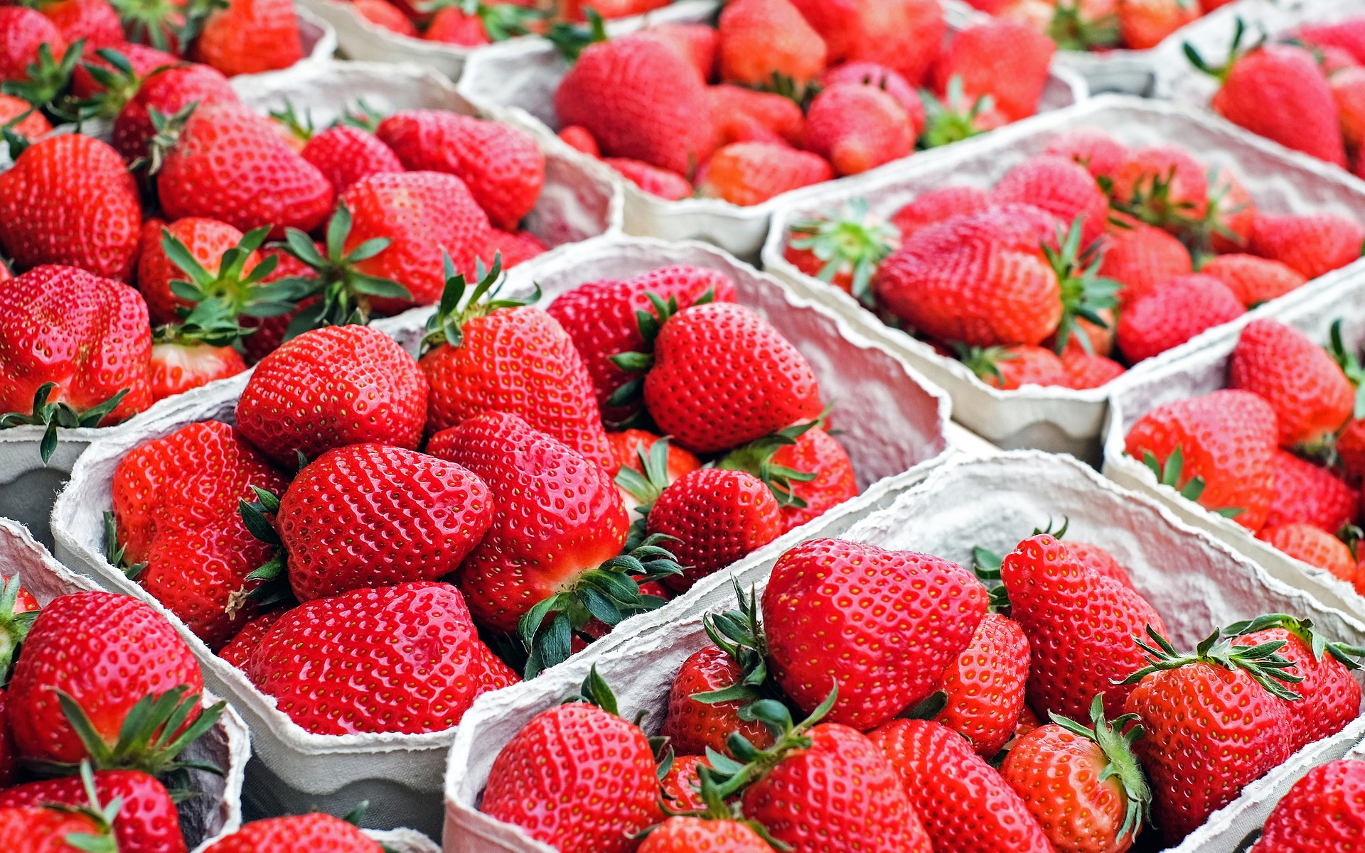 Punnets of bright red strawberries in cardboard containers, bright green leaves and stalks.