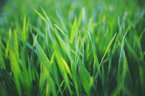 Close up blades of grass with different green tones