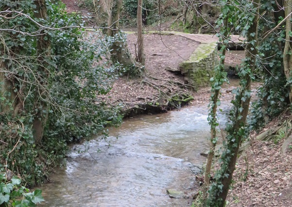 Wooded area with trees and Brook running through the middle