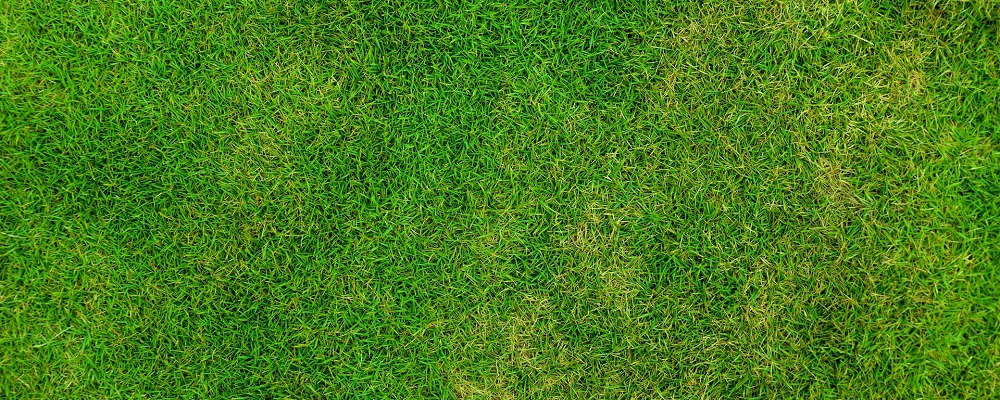 A birds eye view of a patch of green grass