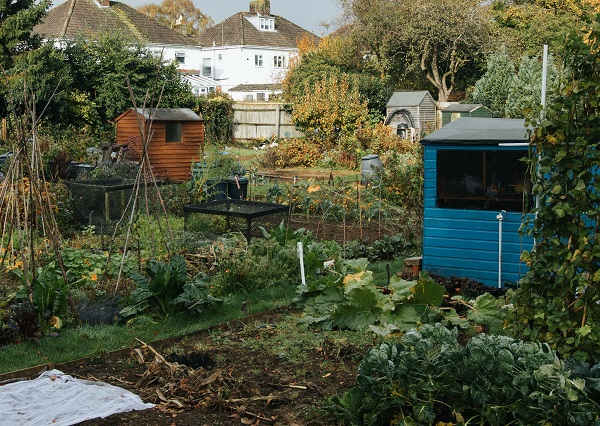 An allotment covered in greenery