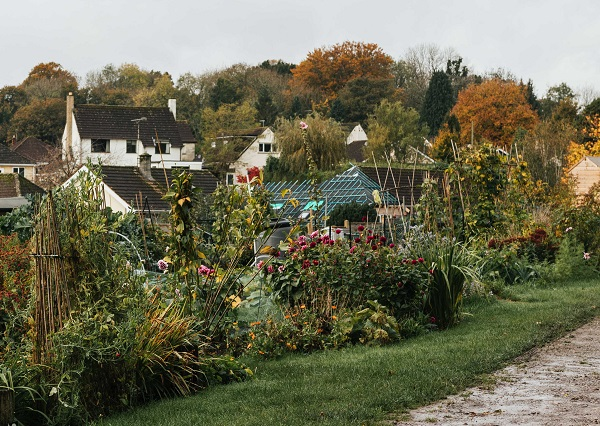 An allotment site covered in greenery