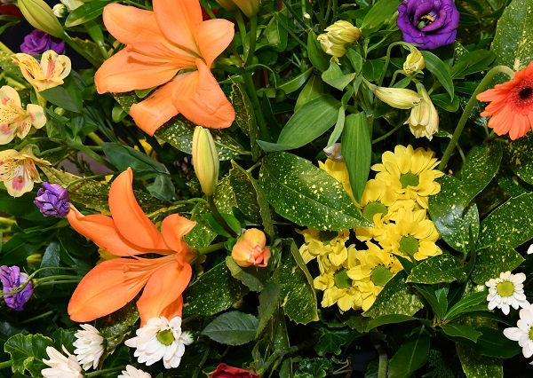 bunch of bright orange, yellow and purple flowers on a bed of green foliage