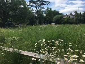 Wildflower area in Chippenham